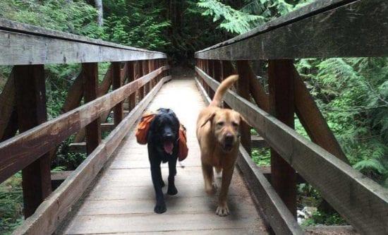 dos perros caminando en el puente
