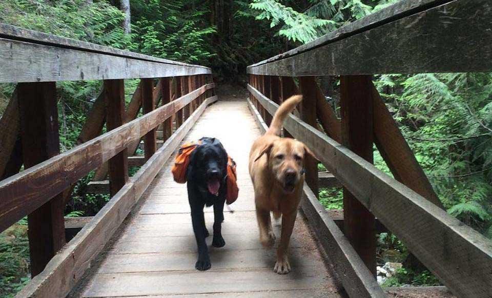 Two dogs walking across a bridge